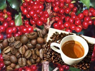 Café pode afastar de idosas o risco da gota Eventos BaresSP 570x300 imagem