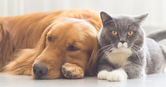Confira os melhores restaurantes Pet Friendly de São Paulo Eventos BaresSP 570x300 imagem