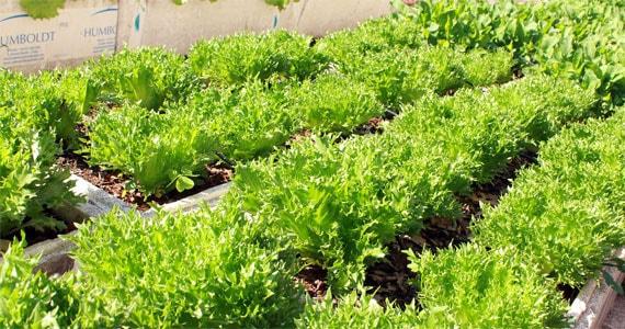 Piazza Zini prepara salada colhida no dia faz toda a diferença BaresSP