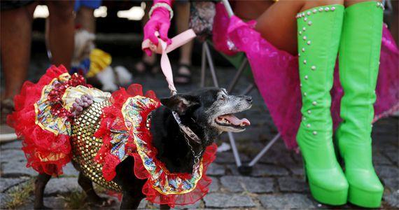 Sábado é dia dos pets caírem na folia do carnaval com o BloCão Eventos BaresSP 570x300 imagem